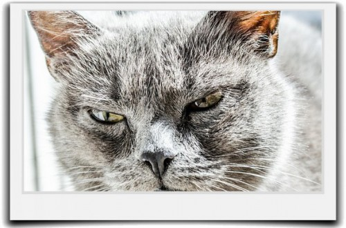 自分の怒りを鎮める方法-人にイラッとする心の原因とは?