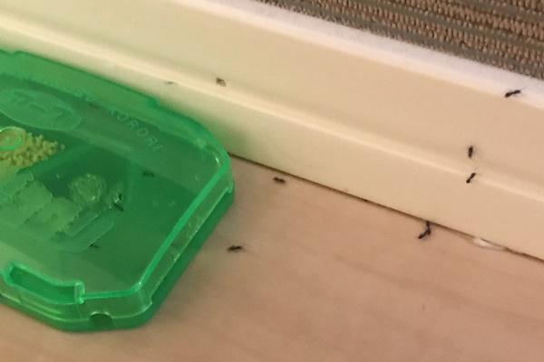 蟻が家の中を徘徊してたので対策したら劇的効果だった
